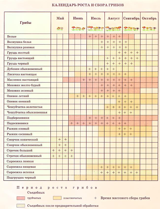 Календарь сбора грибов в Московской области